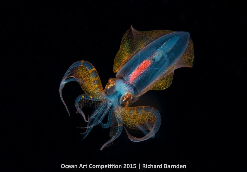 Is dit een buitenaards wezen? Nee hoor, 'gewoon' een inktvis. Het dier is 's nachts gefotografeerd door Richard Barnden.