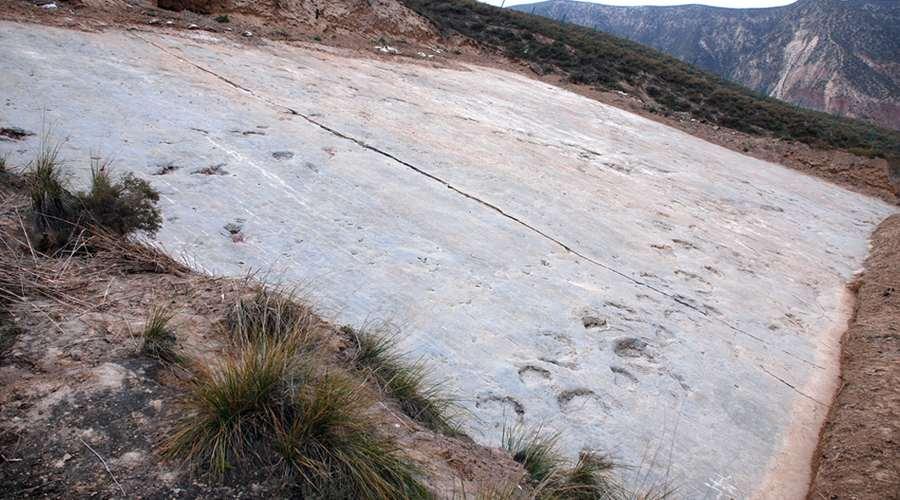 De afdrukken die de dinosaurussen 120 miljoen jaar geleden achterlieten. Afbeelding: Scientific Reports - doi:10.1038/srep21138.