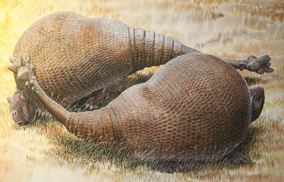 Twee glyptodonten. Afbeelding: Peter Schouten.