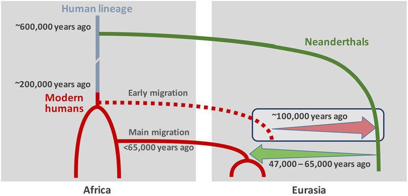 Dit schema brengt de theorie van de wetenschappers in beeld. Een groepje moderne mensen zou Afrika lang voor de moderne mensen waar onder meer de Europeanen vanaf stammen, verlaten hebben. Afbeelding: © Ilan Gronau.