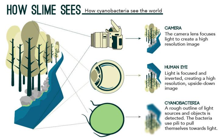 Zo 'ziet' een camera, een menselijk oog en een bacterie de wereld. Afbeelding: eLife / https://dx.doi.org/10.7554/eLife.12620.