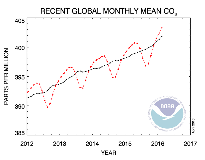 De CO2-concentratie in de atmosfeer. De zwarte lijn geeft het gemiddelde aan, de rode lijn de maandelijkse schommelingen. Credits: NOAA