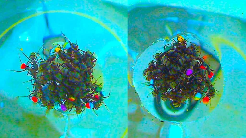 Elke mier kreeg een kleurtje.