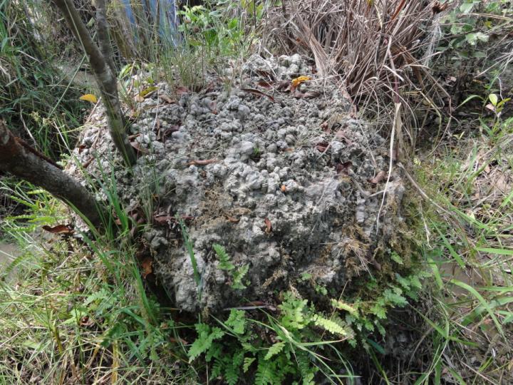 Een voorbeeld van zo'n door aardwormen veroorzaakte hoop. Afbeelding: José Iriarte.