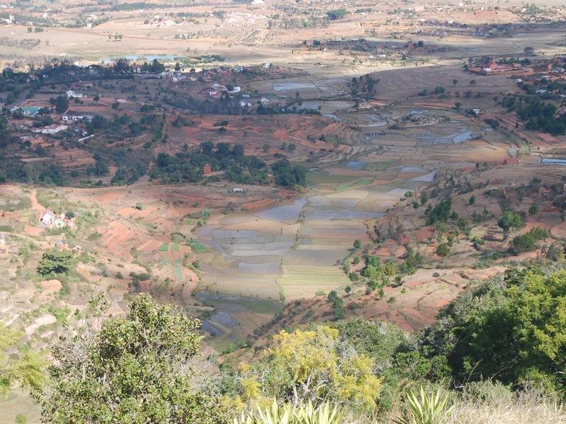 Ook vandaag de dag zijn er nog veel rijstvelden op Madagaskar te vinden. Afbeelding: © Mark Horton / University of Bristol.