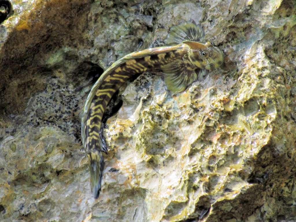 Een naakte slijmvis op het land. Afbeelding: Dr. Georgina Cooke.