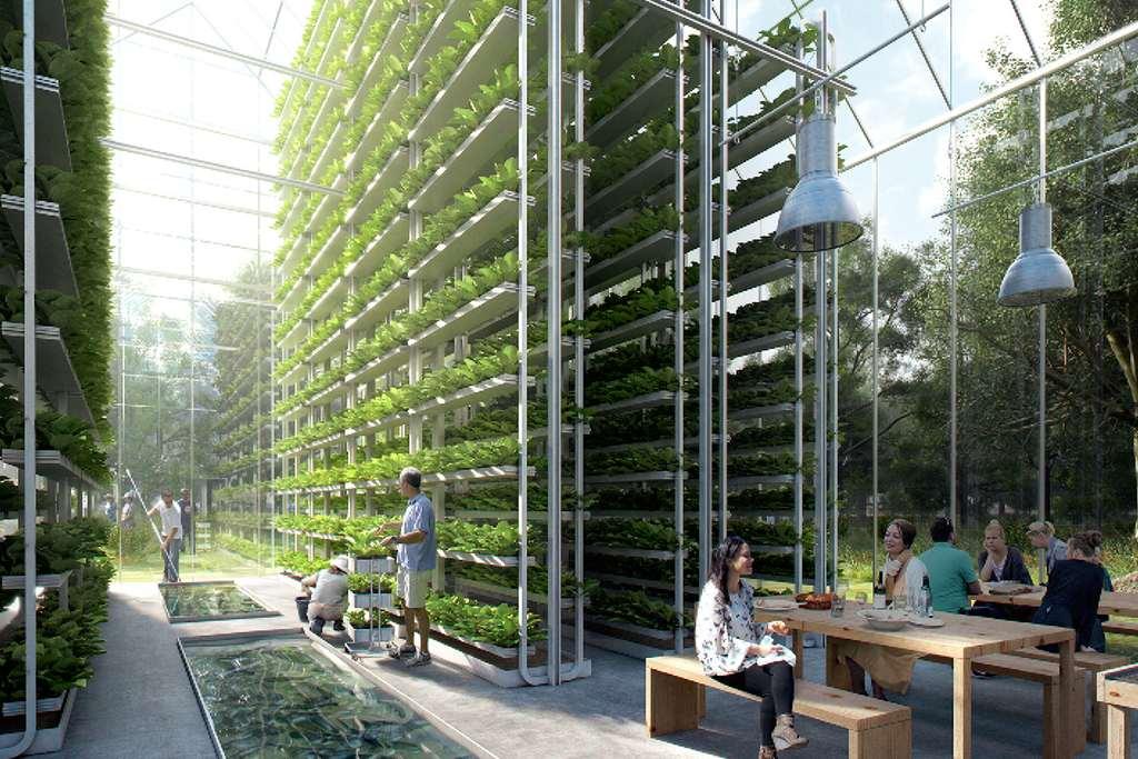 Vertical farming en aquaponics worden hier gecombineerd.