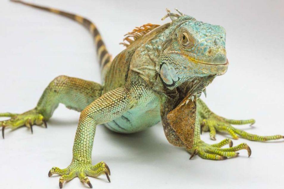 Reptielen: we vinden ze op het tweede niveau van bewustzijn, zo stelt Kaku.