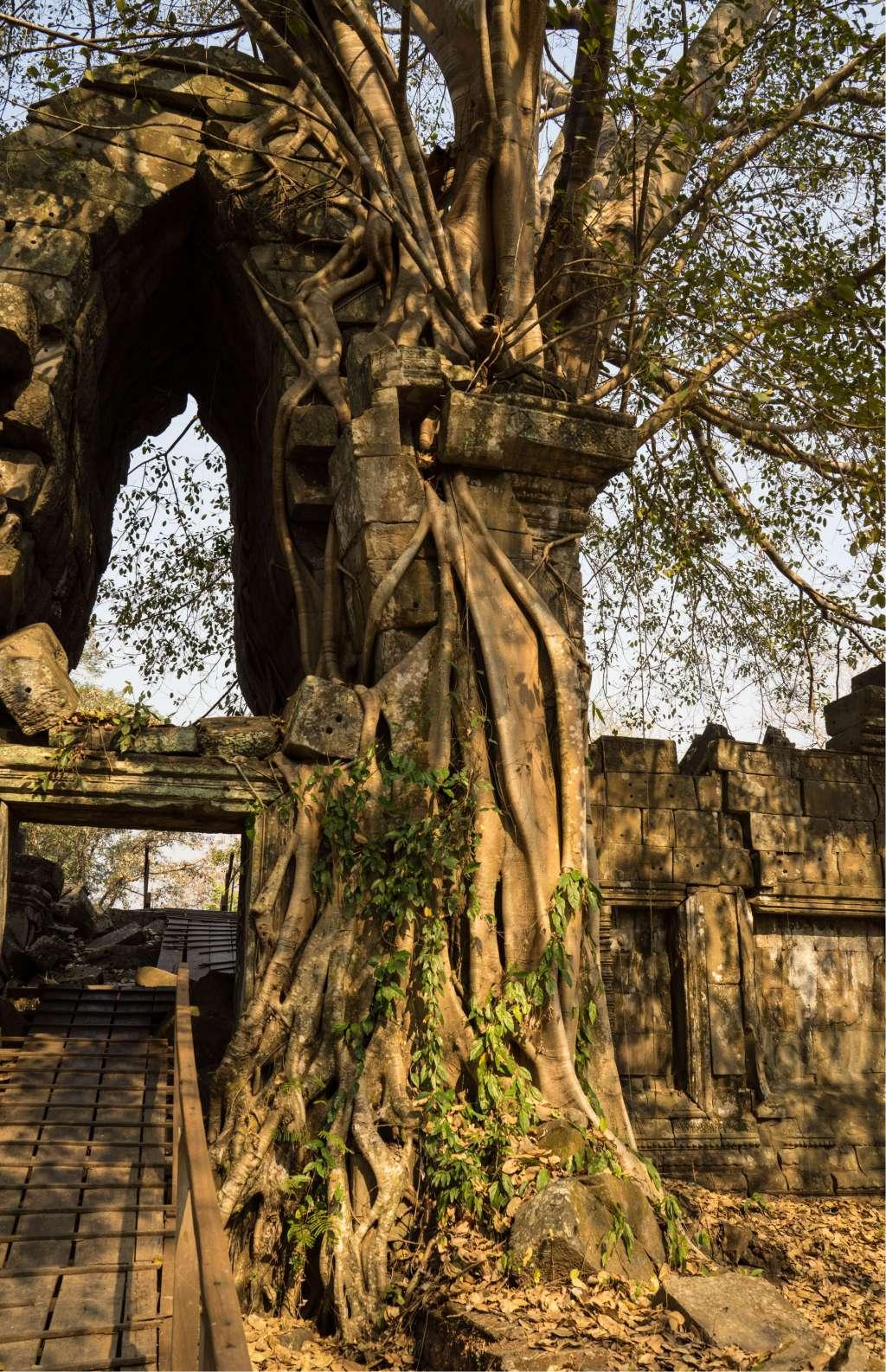 Rond deze ruïnes ontdekten onderzoekers dankzij de lasers een heel stadsnetwerk. Afbeelding: Francisco Goncalves.