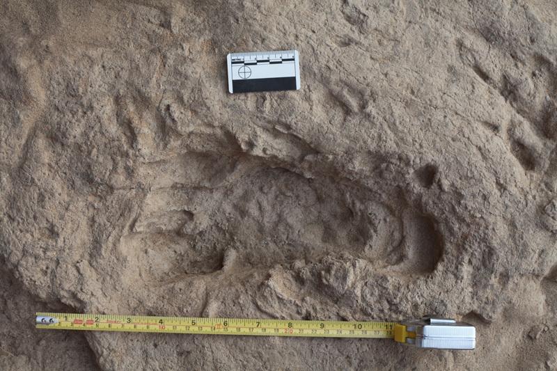 Eén van de anderhalf miljoen jaar oude voetafdrukken van een Homo erectus. Afbeelding: Kevin Hatala.