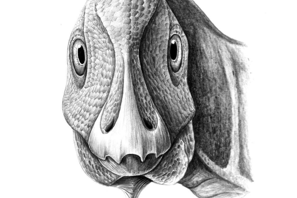Een reconstructie van de jonge Telmatosaurus. Afbeelding: Mihai Dumbravă.