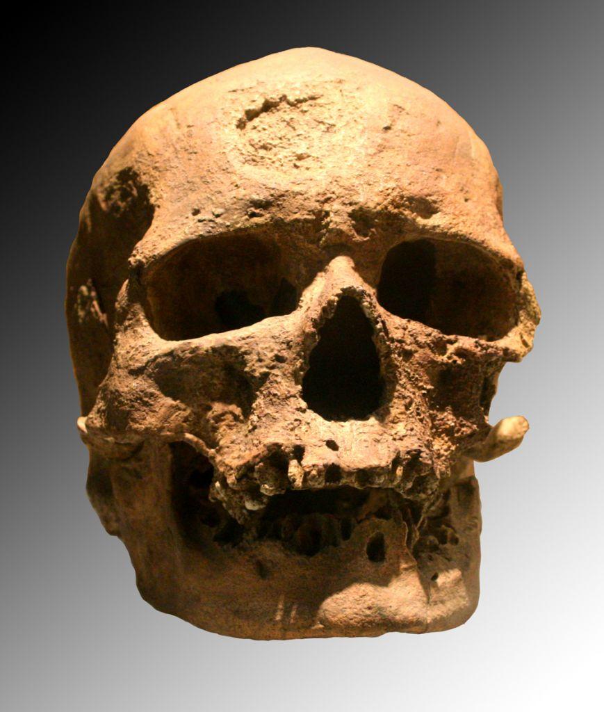 De schedel van een cro-magnonmens. Afbeelding: 120 (via Wikimedia Commons).