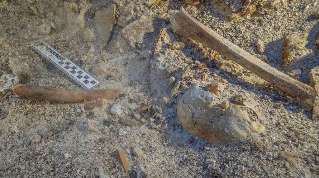 Zo troffen de onderzoekers de resten in het water aan. Je ziet hier enkele lange botten uit de armen en benen en de schedel. Afbeelding: Brett Seymour, EUA / WHOI / ARGO.
