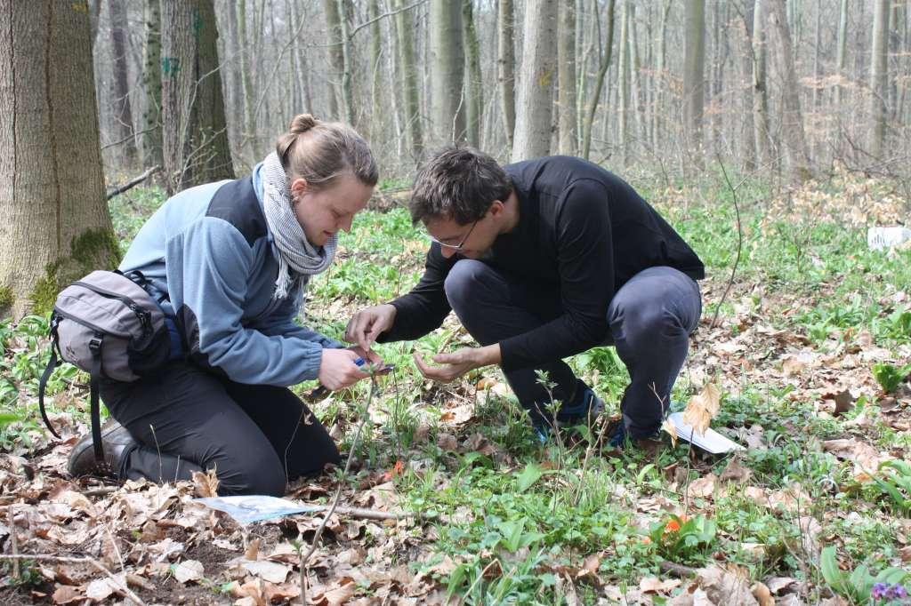 De onderzoekers aan het werk in het bos. Afbeelding: Bettina Ohse (UL/iDiv).