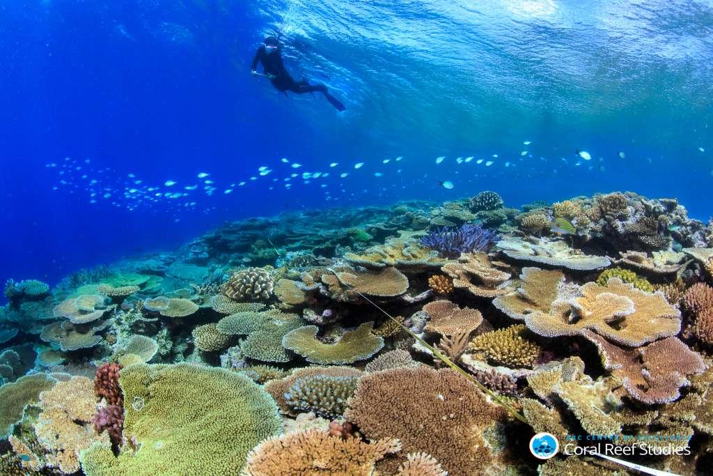 Gezond koraal in het zuidelijke deel van het Great Barrier Reef. Afbeelding: Tane Sinclair Taylor.