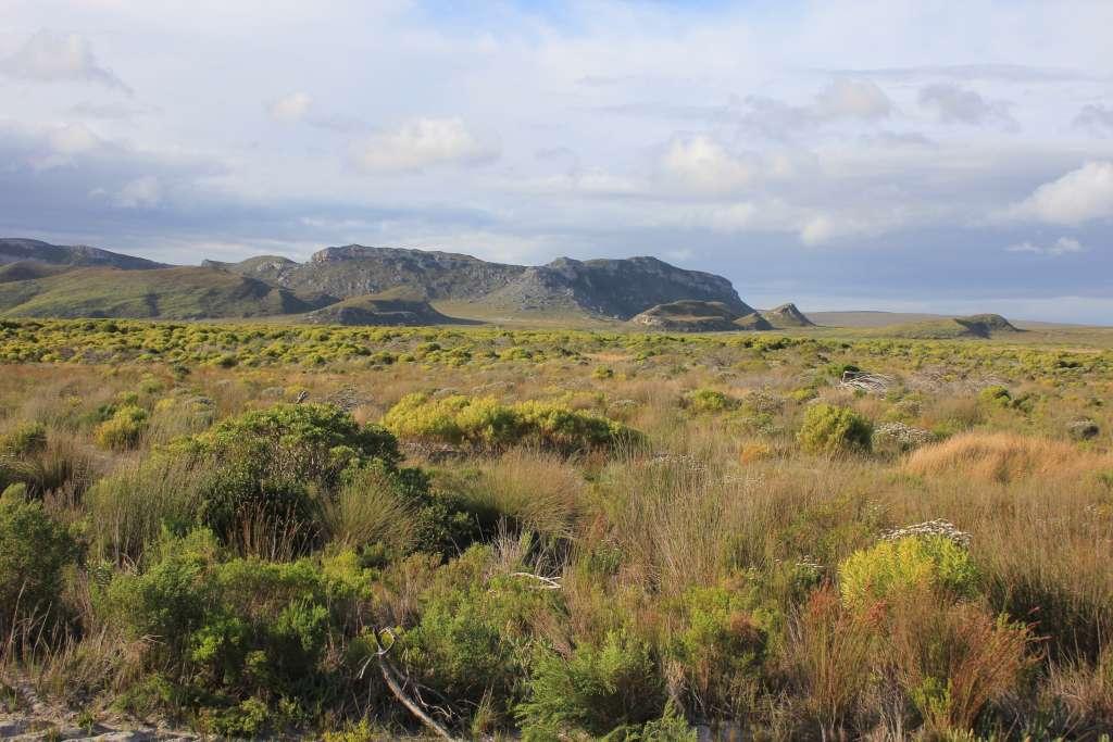 Fynbos vegetatie in de Garden Route.