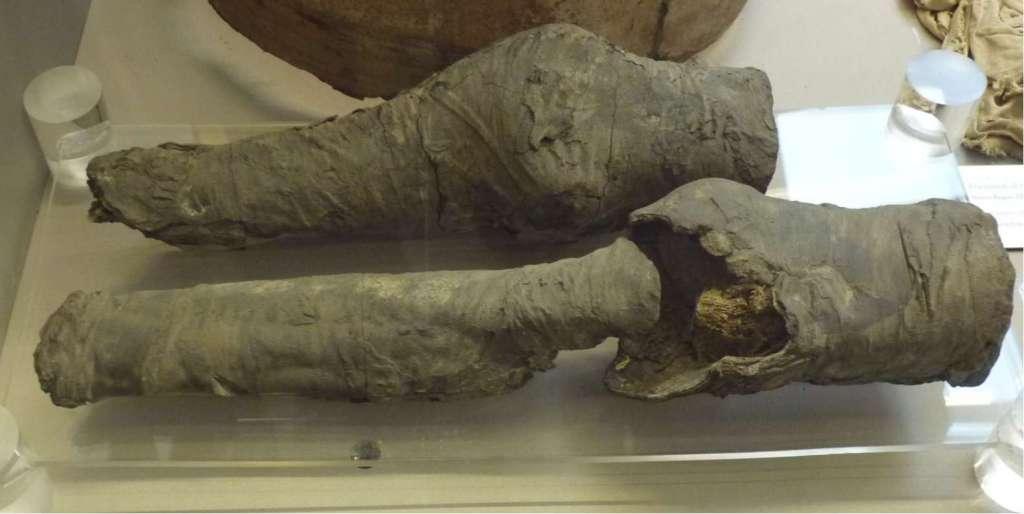 De gemummificeerde benen. Het langste gemummificeerde been bestaat uit een deel van een scheenbeen, een knieschijf en een dijbeen. Het andere been bestaat uit een deel van het scheen- en een deel van het dijbeen.