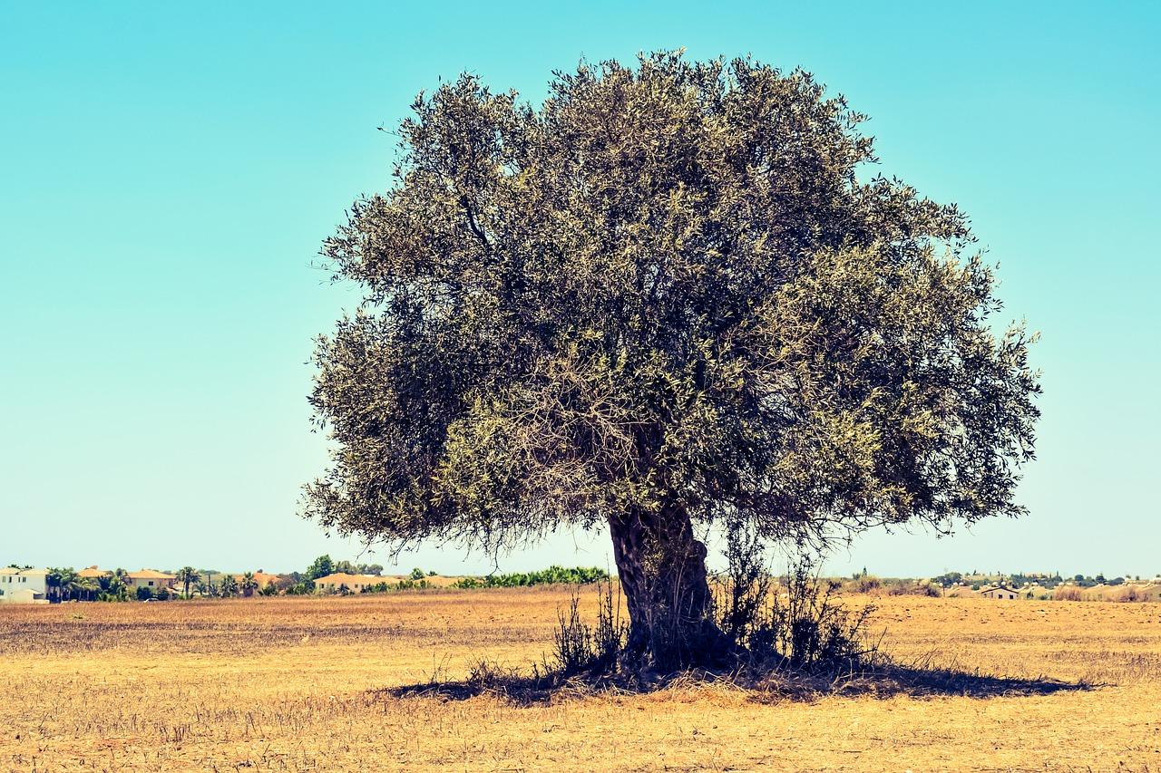 Oude bomen gaan niet met pensioen