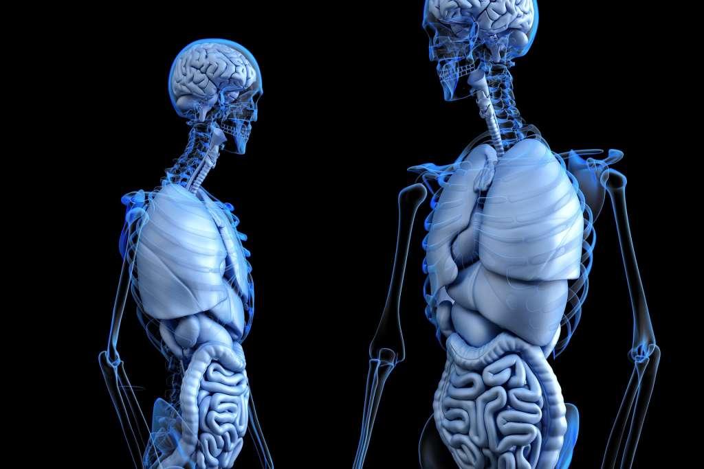 Compleet Nieuw Orgaan Ontdekt In Het Menselijk Lichaam