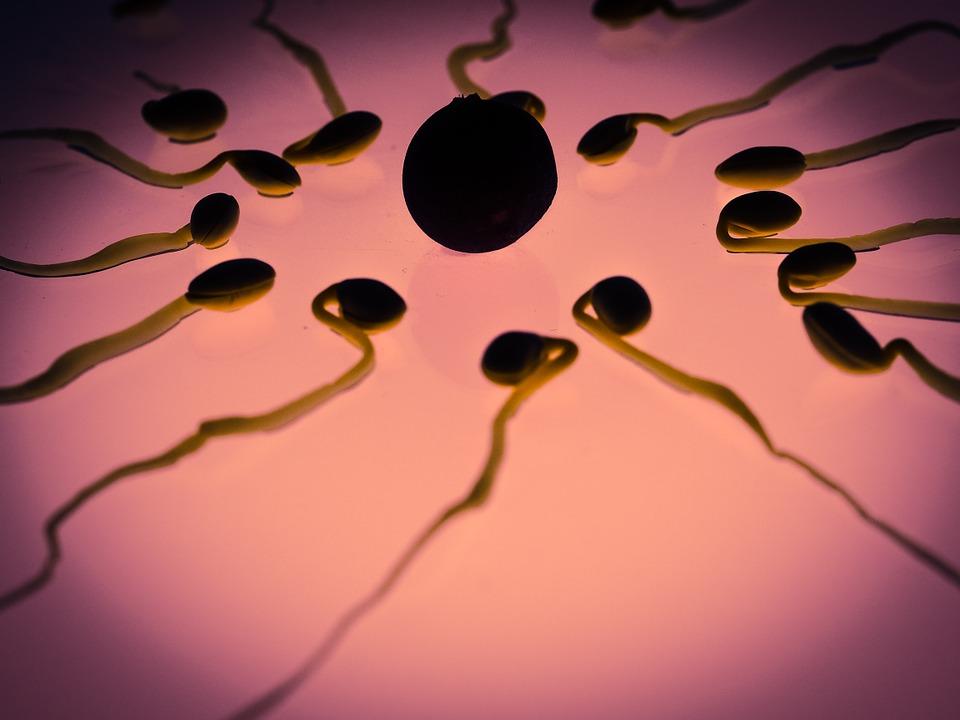 "Afbeelding: <a href=""https://pixabay.com/nl/sperma-ei-bevruchting-geslacht-cel-956482/"">TBIT</a> / Pixabay"