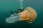 Kwal ter grootte van een mens gespot voor de kust van Engeland