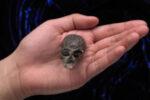 20 miljoen jaar oude schedel schijnt licht op de evolutie van onze hersenen