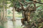 Bekken van uitgestorven aap Rudapithecus werpt nieuw licht op menselijke evolutie