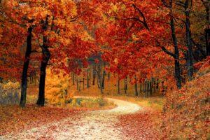 De herfstequinox: de astronomische herfst begint!