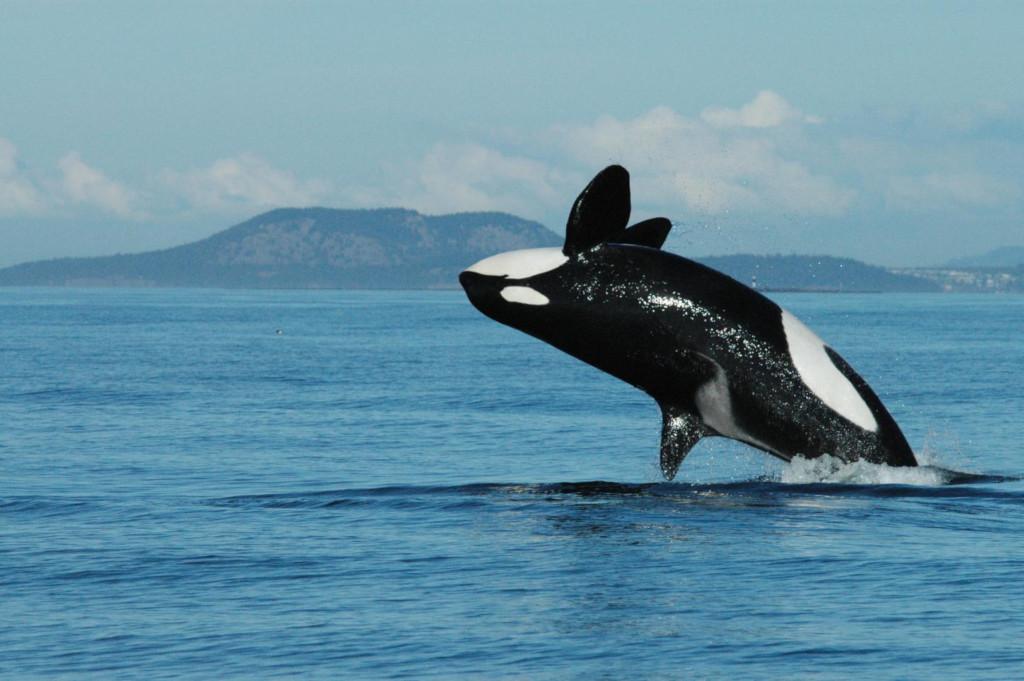 in-de-overgang-gekomen-oma%E2%80%99s-spelen-een-belangrijke-rol-binnen-de-orka-samenleving