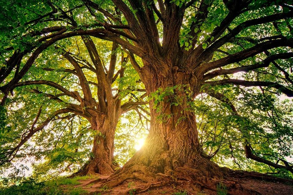 Bomen zijn zich in zekere zin 'bewust' van hun gewicht