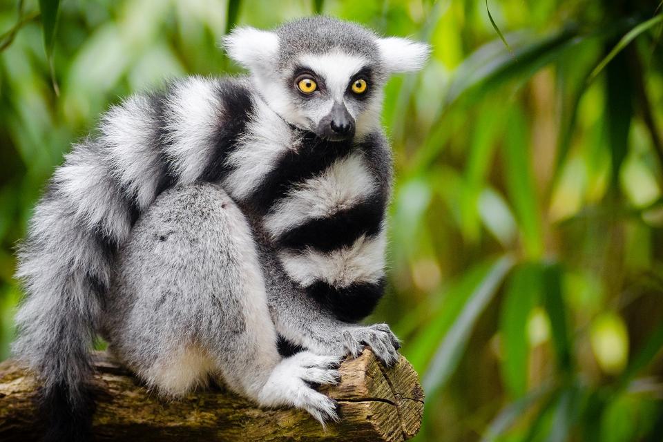 we-dreigen-meer-dan-32000-soorten-te-verliezen