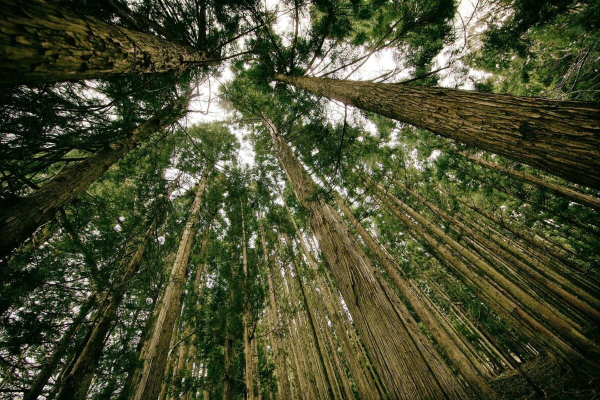 hoeveel weegt een boom