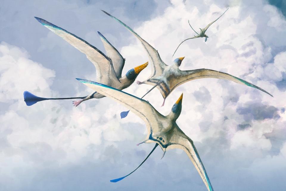 deze-vliegende-reptielen-verbeterden-hun-vliegkunsten-150-miljoen-jaar-op-rij