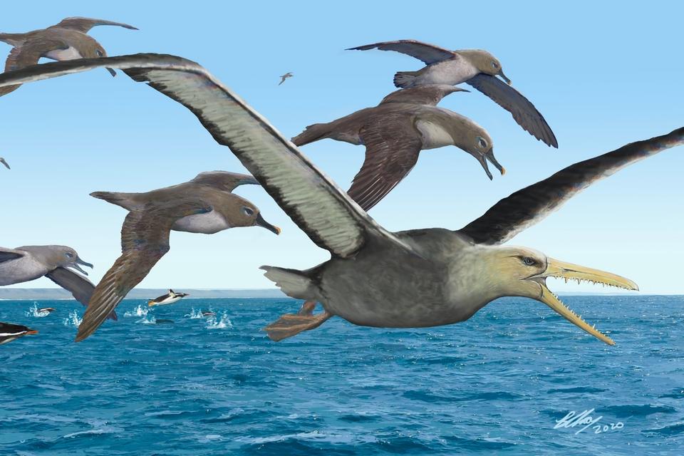 de-dino%E2%80%99s-waren-nog-maar-net-dood-toen-op-antarctica-gigantische-vogels-ontstonden