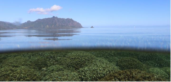 Dit is waarom sommige koralen verbleken terwijl soortgenoten kranig standhouden - Scientias.nl