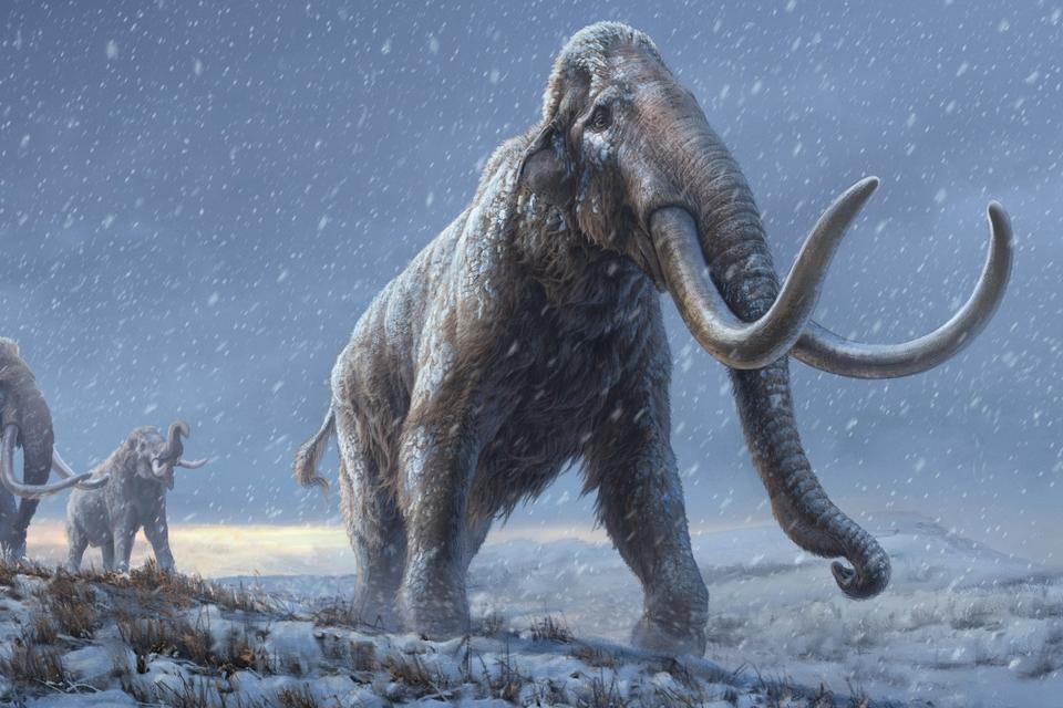 DNA van meer dan 1 miljoen jaar oude mammoet in kaart gebracht - Scientias.nl