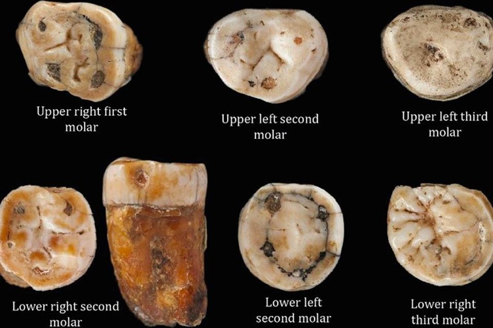 Kiezen suggereren dat ook Britse Neanderthalers het goed met onze voorouders konden vinden - Scientias.nl