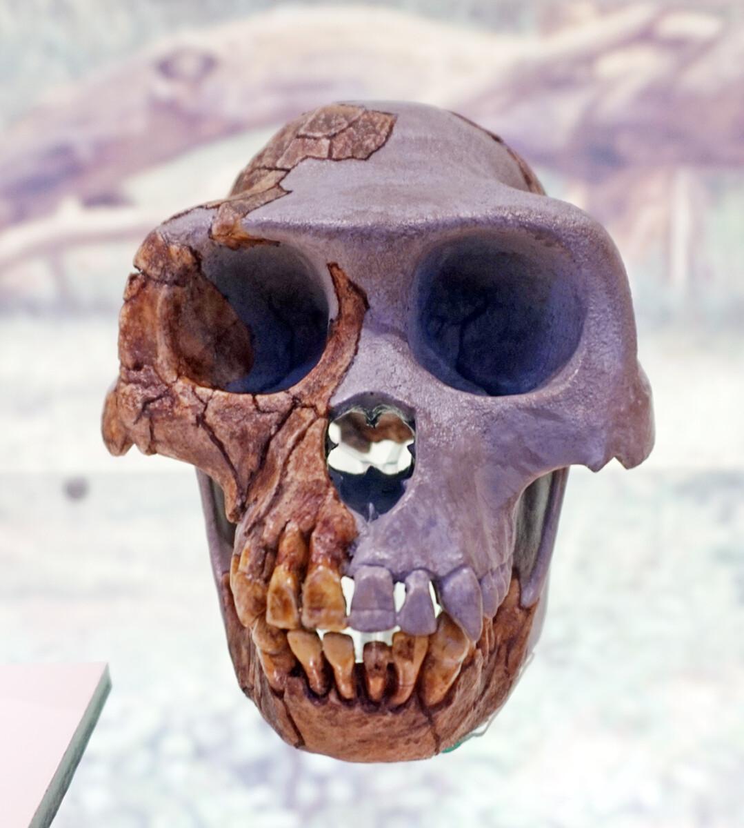 4 miljoen jaar oude hand onthult hoe de eerste mensen rechtop gingen lopen - Scientias.nl